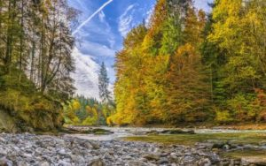 nature-water-ecosystem-nature-reserve-wilderness-leaf-1442041-pxhere-400x250 (1)